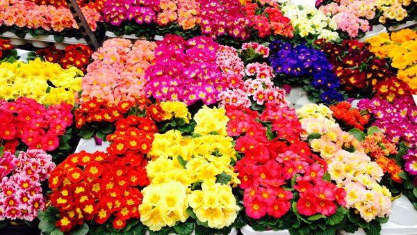 Benevento in fiore