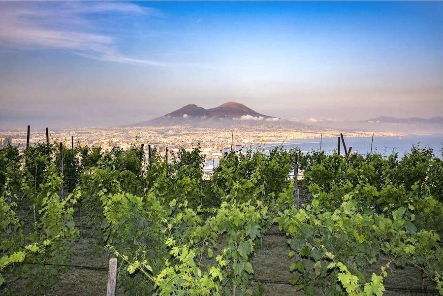 Dalla Pedamentina alla Vigna di San Martino con aperitivo