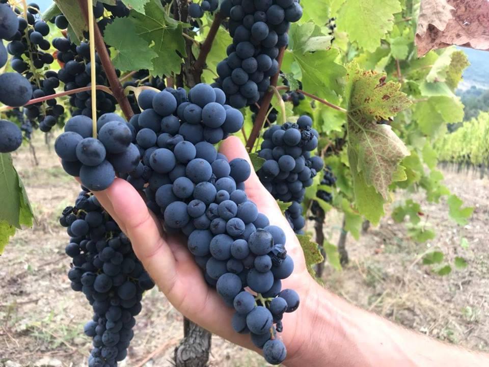 D'autunno, per borghi e per vigne del Cilento