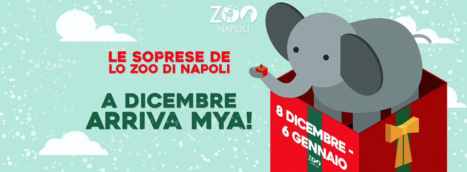 Natale allo zoo di Napoli