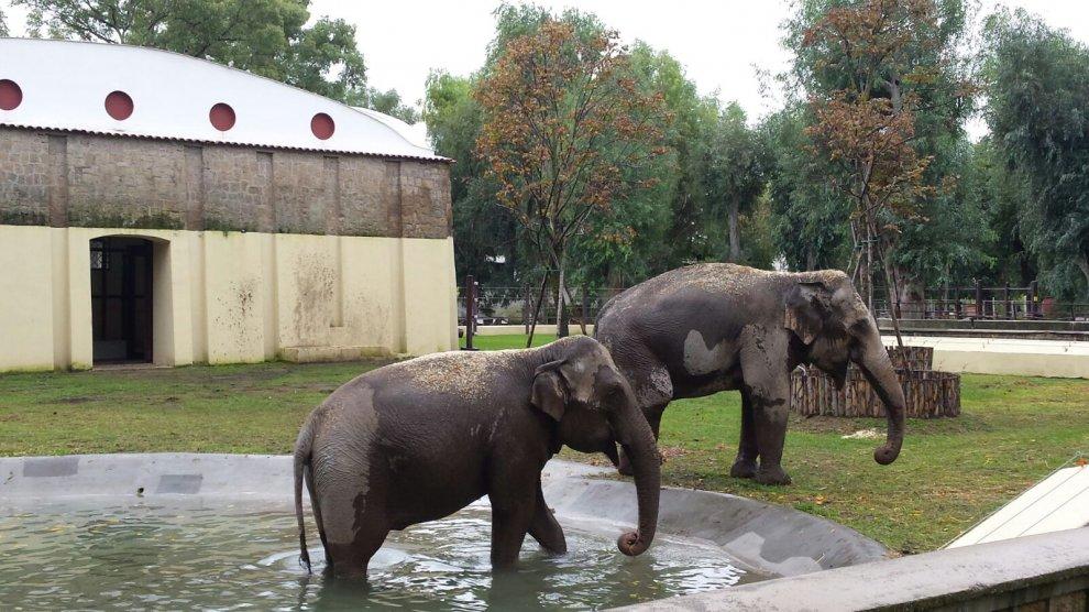 Zoo di Napoli: info e prezzi
