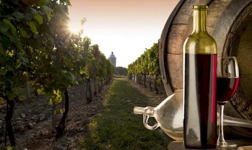 Solopaca, città del vino