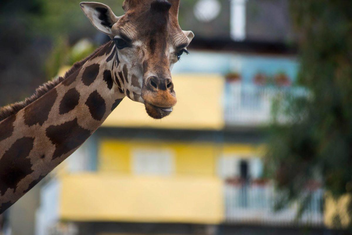 Zoo di Napoli. tutte le info